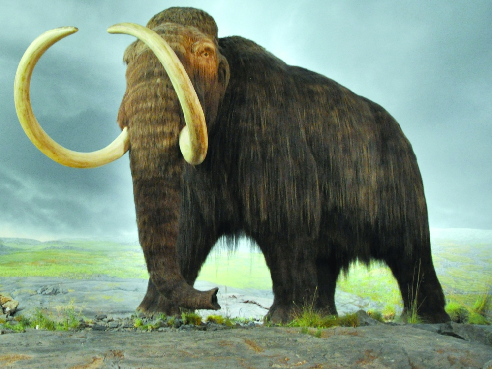 wooly mammoth by silentravyn - photo #8