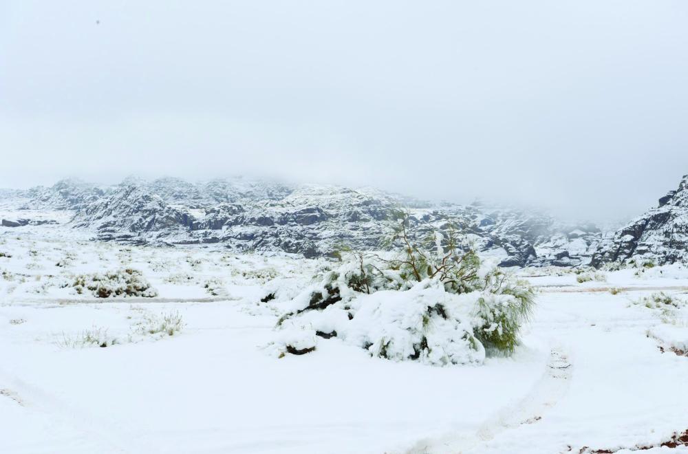 الرداء الأبيض يتجدد في جبل اللوز ويشكل لوحة فنية صحيفة مكة